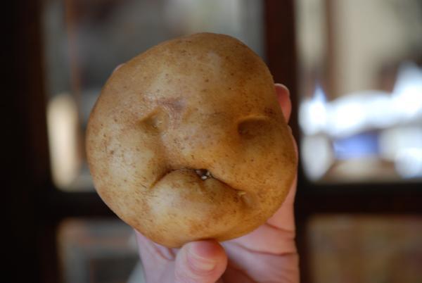 Potato Dutton